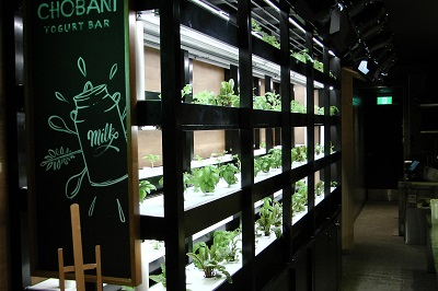 Green Wall of living herbs