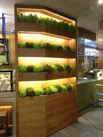 Green Wall of living lettuce