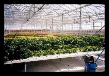Commercial Hydroponics In Australia