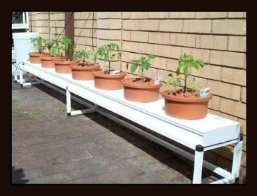 Hydroponically grown home produce